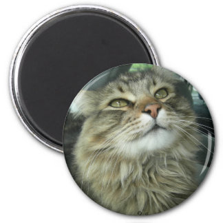 Maine Coon kitty 6 Cm Round Magnet