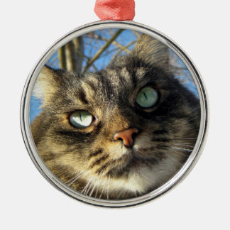 Maine Coon Kitty Cat Ornament