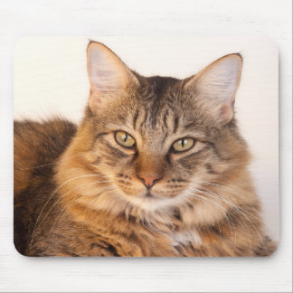 Maine Coon Kitty Mouse Mat