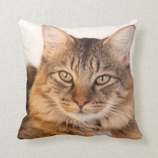 Maine Coon Kitty Throw Pillow