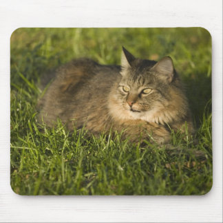 Maine coon (largest breed of domestic cats) mouse mat