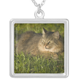 Maine coon (largest breed of domestic cats) silver plated necklace