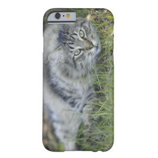 Maine Coon laying in grass, Central Florida. Barely There iPhone 6 Case