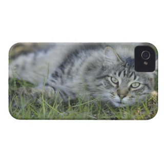 Maine Coon laying in grass, Central Florida. Case-Mate iPhone 4 Case