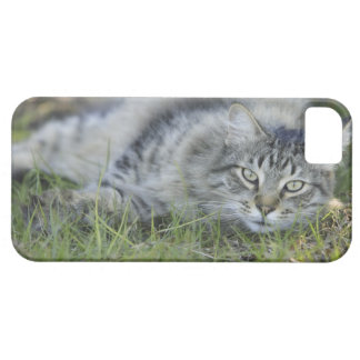 Maine Coon laying in grass, Central Florida. iPhone 5 Covers