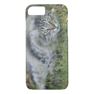 Maine Coon laying in grass, Central Florida. iPhone 8/7 Case