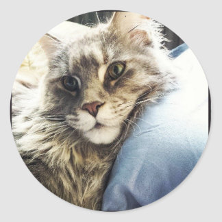 Maine Coon Round Sticker