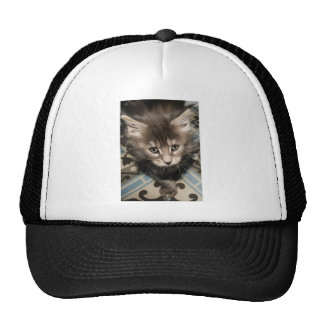 Maine Coon seal Cap