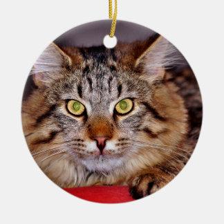 Maine-Coone Cat Round Ceramic Decoration