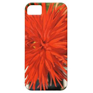 Maine Mum Brilliant Red Flower iPhone 5 Covers