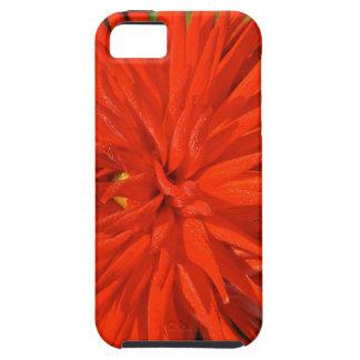Maine Mum Brilliant Red Flower iPhone 5 Cases