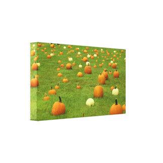 Maine Pumpkins In A Field Canvas Print