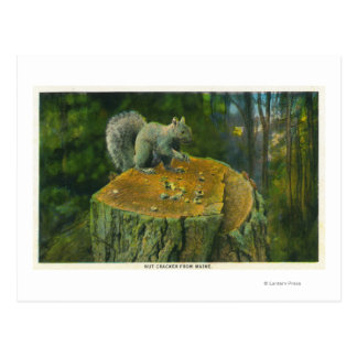 MaineA Little Nutcracker Squirrel from Maine Postcard