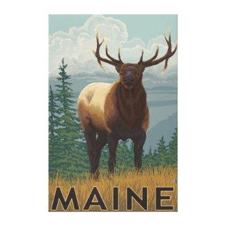MaineElk Scene Canvas Prints