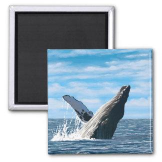 MaineHumpback Whale Scene Square Magnet