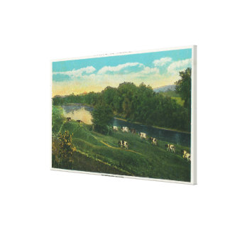 MaineView of Cows Homeward Bound Canvas Print