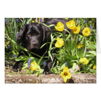 Maisie in the Flowerbed Blank for your own Message Greeting Card