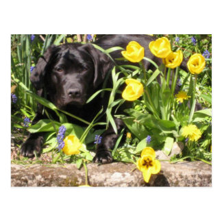 Maisie in the Flowerbed Postcard