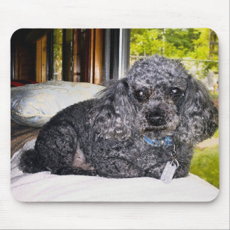 Maitai The Poodle, Mouse Pad. Mouse Mat