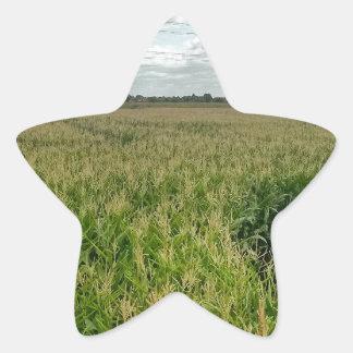 Maize maze star sticker