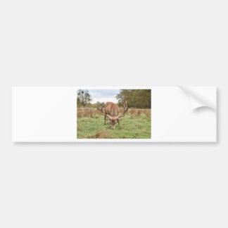 Majestic Animal Bumper Sticker