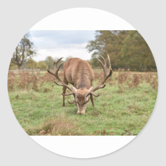 Majestic Animal Classic Round Sticker
