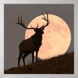 Majestic Bull Elk and Full Moon Rise
