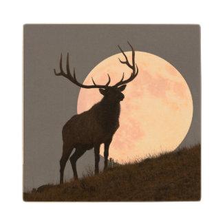 Majestic Bull Elk and Full Moon Rise Maple Wood Coaster