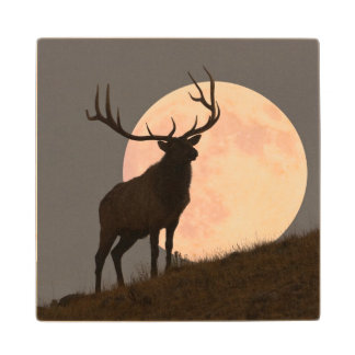Majestic Bull Elk and Full Moon Rise Wood Coaster