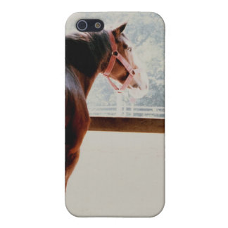 Majestic Clydesdale Case For The iPhone 5