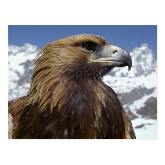 Majestic Eagle Postcard