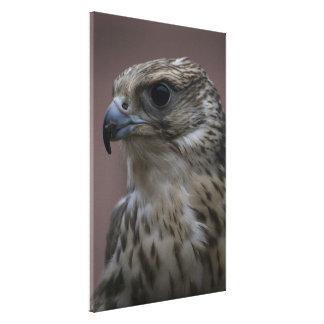 Majestic Falcon Gallery Wrapped Canvas