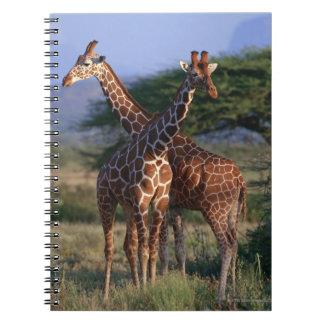 Majestic Giraffes Notebook