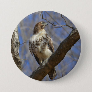 Majestic Hawk 7.5 Cm Round Badge