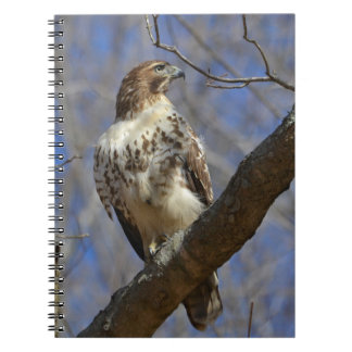 Majestic Hawk Notebooks