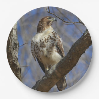 Majestic Hawk Paper Plate