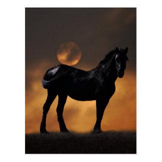 Majestic horse postcard