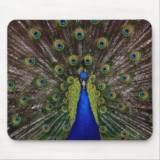 Majestic Indian Peacock Mouse Pad
