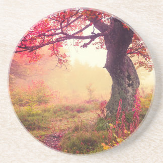 Majestic Landscape With Autumn Trees In Forest Coaster