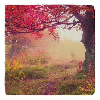 Majestic Landscape With Autumn Trees In Forest Trivet