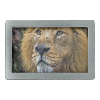 Majestic lion belt buckles