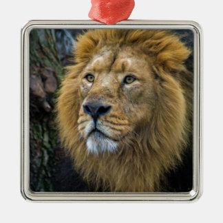 Majestic lion christmas ornament