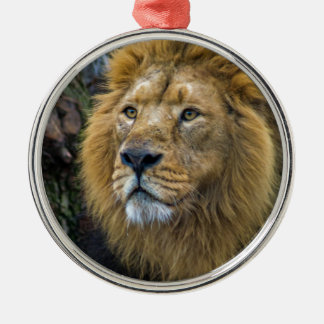 Majestic lion christmas ornament