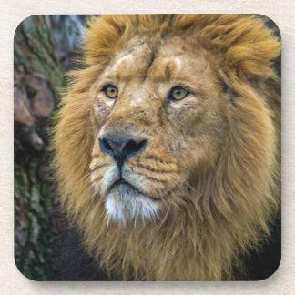 Majestic lion coaster