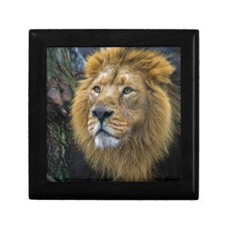 Majestic lion gift box