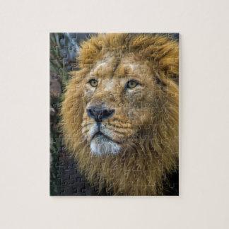Majestic lion jigsaw puzzle