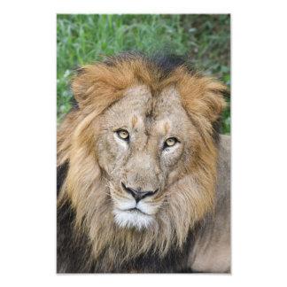 Majestic Lion King Art Photo