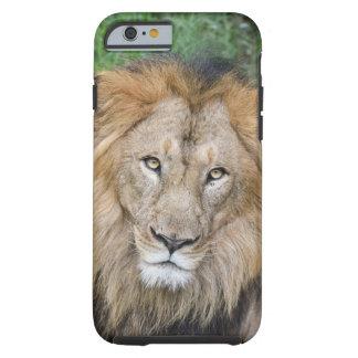 Majestic Lion King Tough iPhone 6 Case
