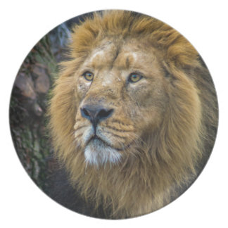 Majestic lion plate