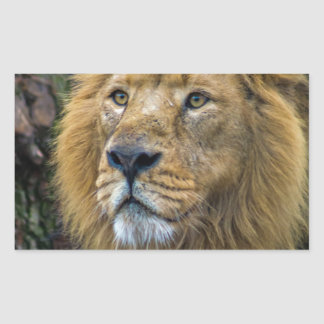 Majestic lion rectangular sticker